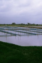 ที่มา: http://www.tnc-partners.com/en/projects_aquaculture.html